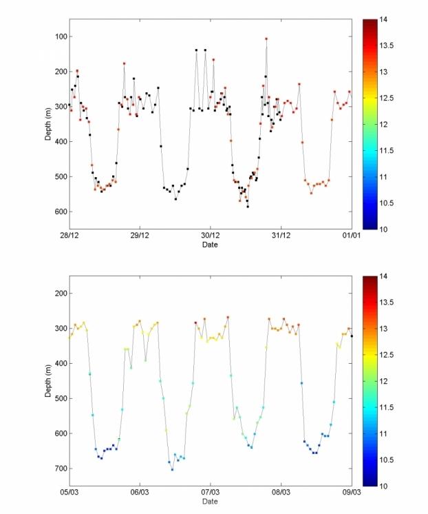 bpc_cospas-sarsat-comportement-vertical-anguilles.jpg